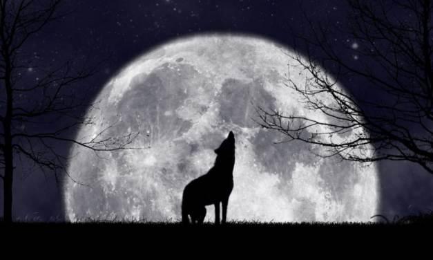Waarom bestaan er zo veel liedjes over wolven?