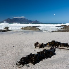 Table Mountain (454F26564)