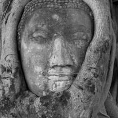 Buddha head (454F2836)