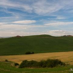 Farmhouse with tree-lined hills, Tuscany (454F28100)
