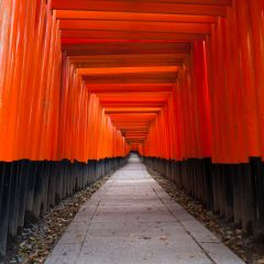 Torii at Fushimi Inari Shrine (454F41163)