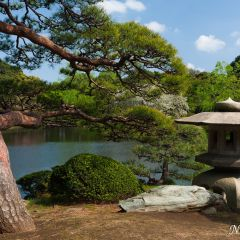 Traditional Japanese garden (454F43590)