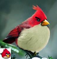 angry-birds-irl-concept-red-bird