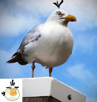 angry-birds-irl-concept-white-bird