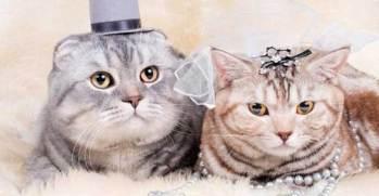animales-casados-12