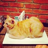 gatos-dia-de-accion-de-gracias-2013-01
