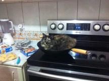 gatos-dia-de-accion-de-gracias-2013-09