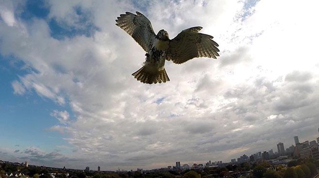halcon-vs-drone