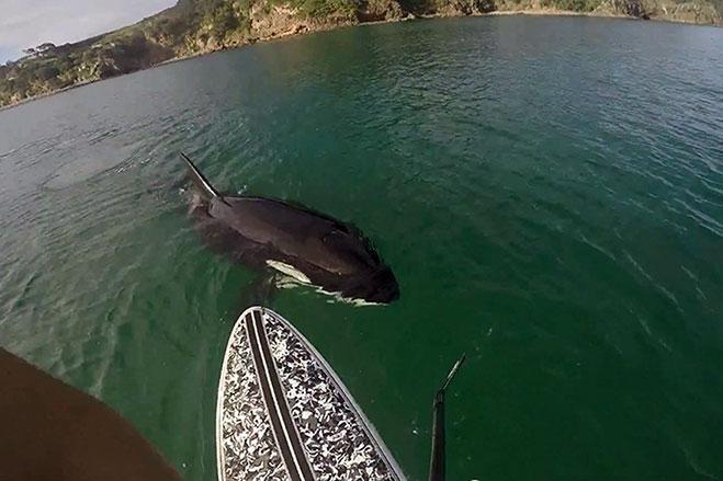 encontro-con-ballena-orca-2015