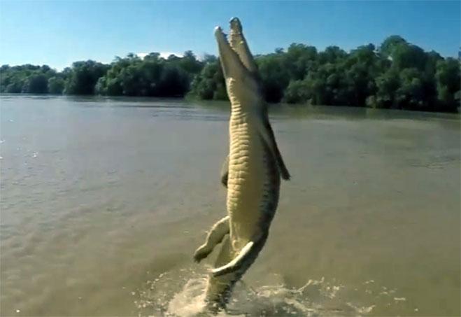 cocodrilo-saliendo-del-rio-verticalmente