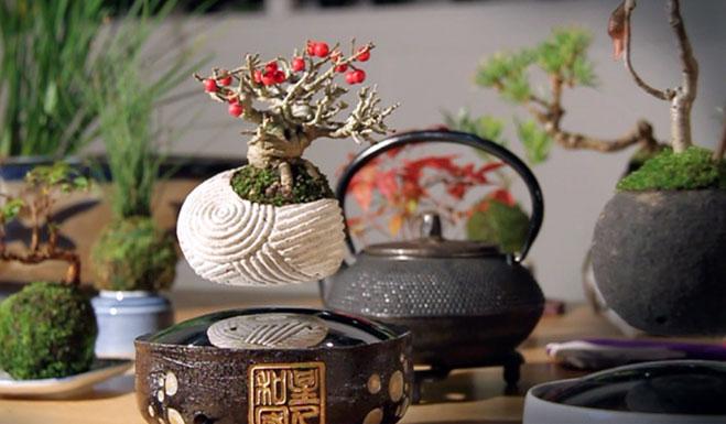 air-bonsai-kickstarter