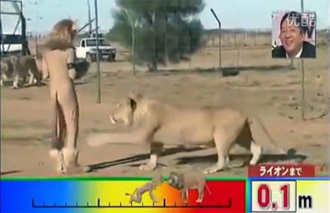 hombre-disfrazado-de-leon-con-leones