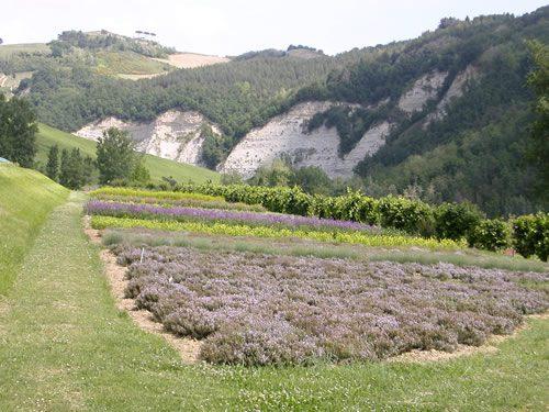 paesaggi di romagna casola valsenio