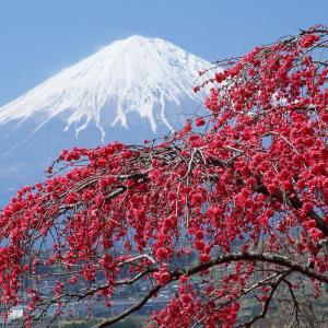 japan (4)