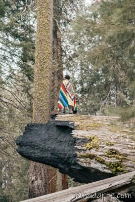 parque nacional sequoia, national park sequoia-305