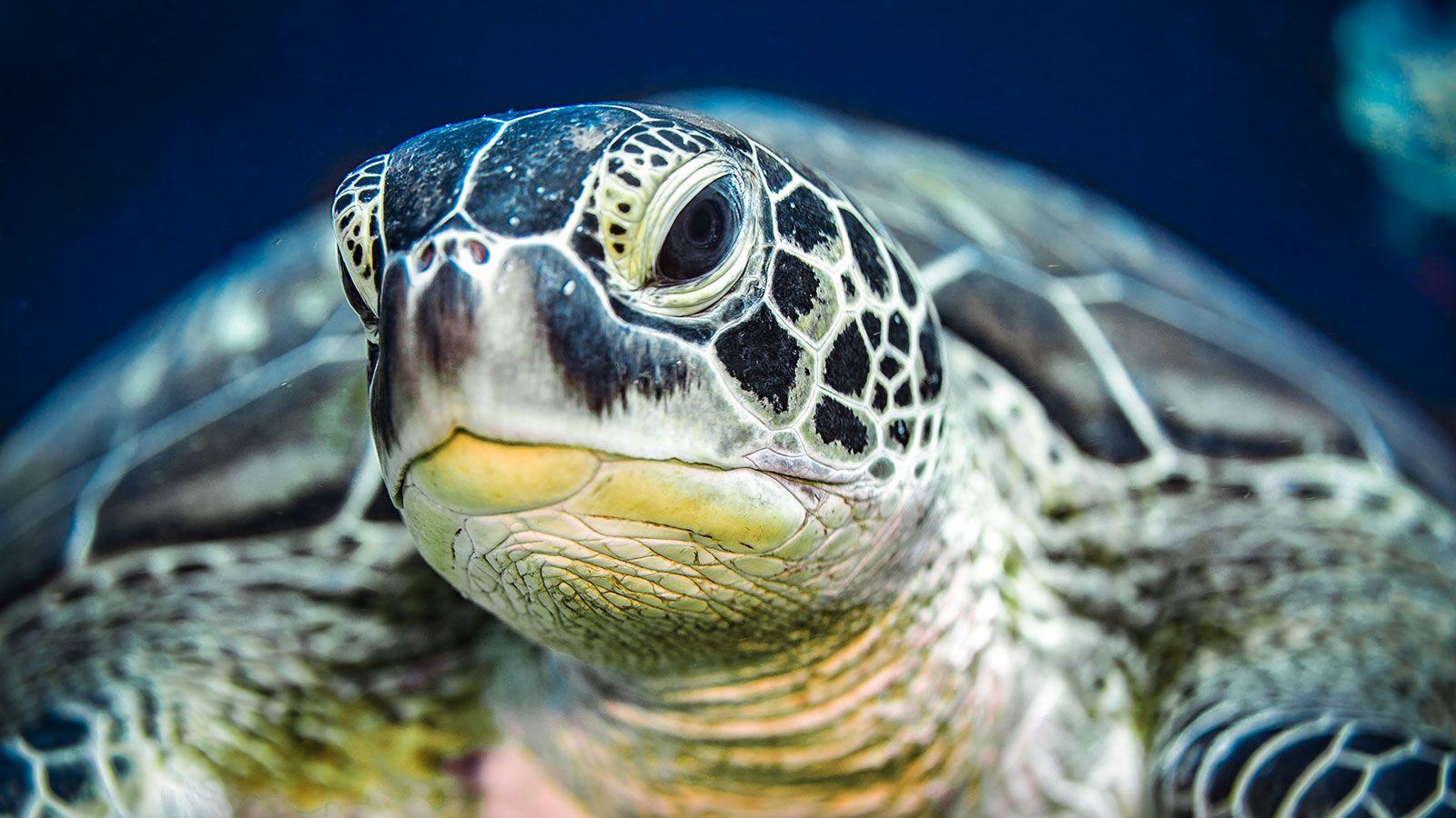 Sea Turtle Presentation And Documentary Evening