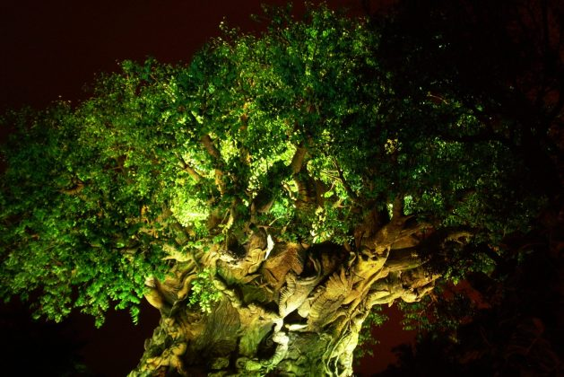Tree of Life - Animal Kingdom for adults