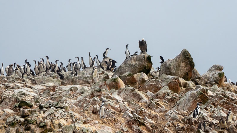 Photo of birds perched on rocks in the Ballestas Islands off the coast of Peru