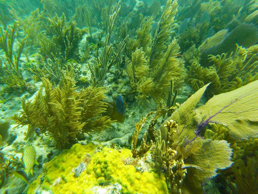 Coral and fish in Biscayne National Park