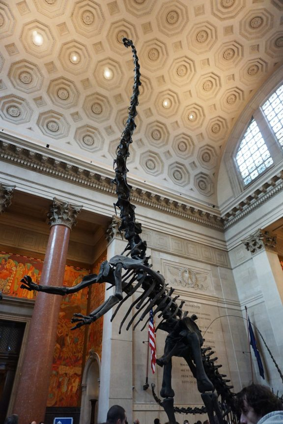 American Museum of Natural History - NYC museums