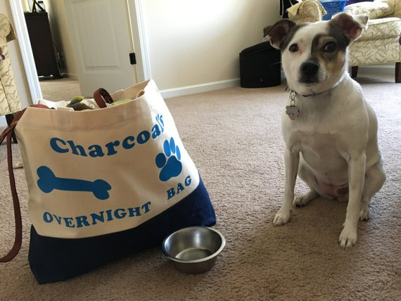 Dog posing with personalized overnight bag