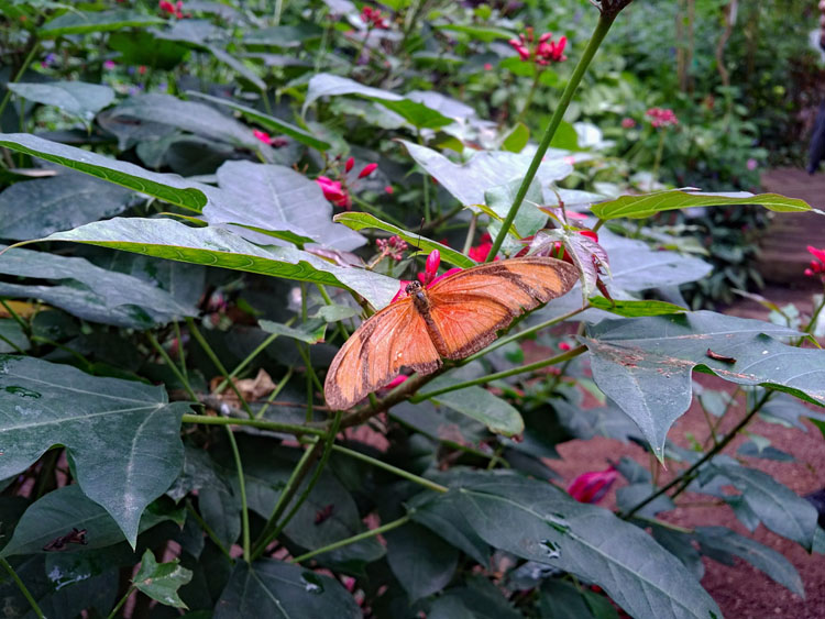Orange butterfly on a leaf inside Naturospace in Honfleur, France
