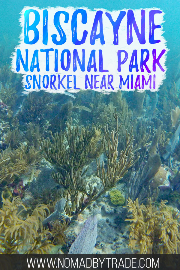 "Colorful coral with text overlay reading ""Biscayne National Park snorkel near Miami"""