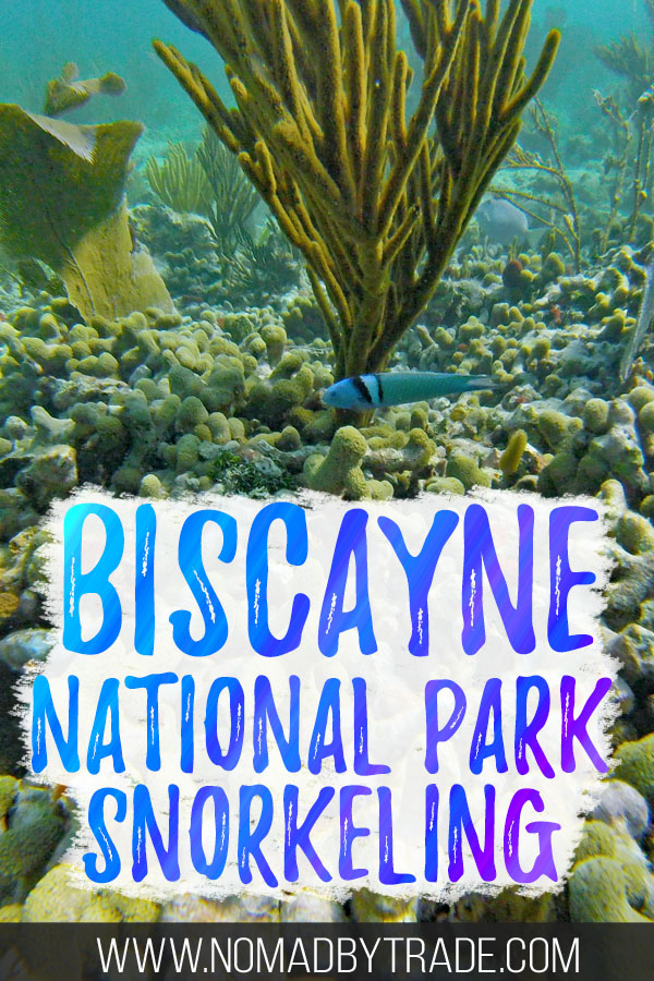 "Colorful fish and coral with text overlay reading ""Biscayne National Park snorkeling"""