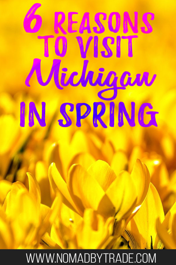 "Yellow flowers with text overlay reading ""6 reasons to visit Michigan in spring"""