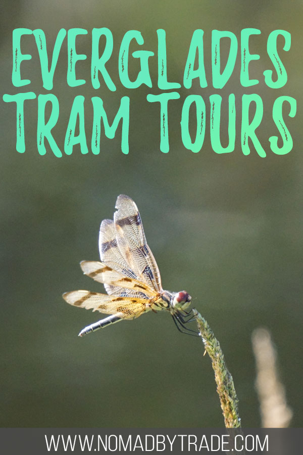 "Photo of a dragonfly with text overlay reading ""Everglades tram tours"""