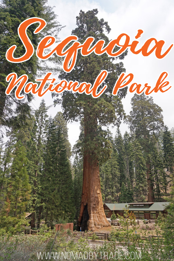 "Giant sequoia tree wit text overlay reading ""Sequoia National Park"""