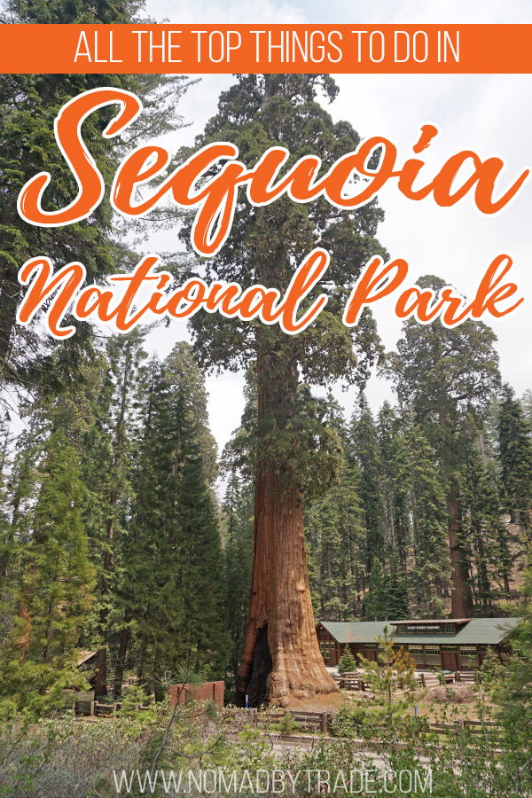 "Sequoia tree in front of the Giant Forest Museum with text overlay reading ""All the best things to do in Sequoia National Park"""
