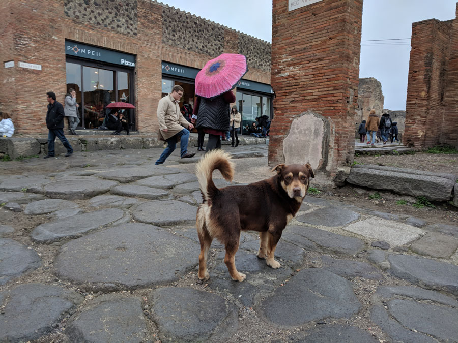 Stray dog in the Pompeii ruins