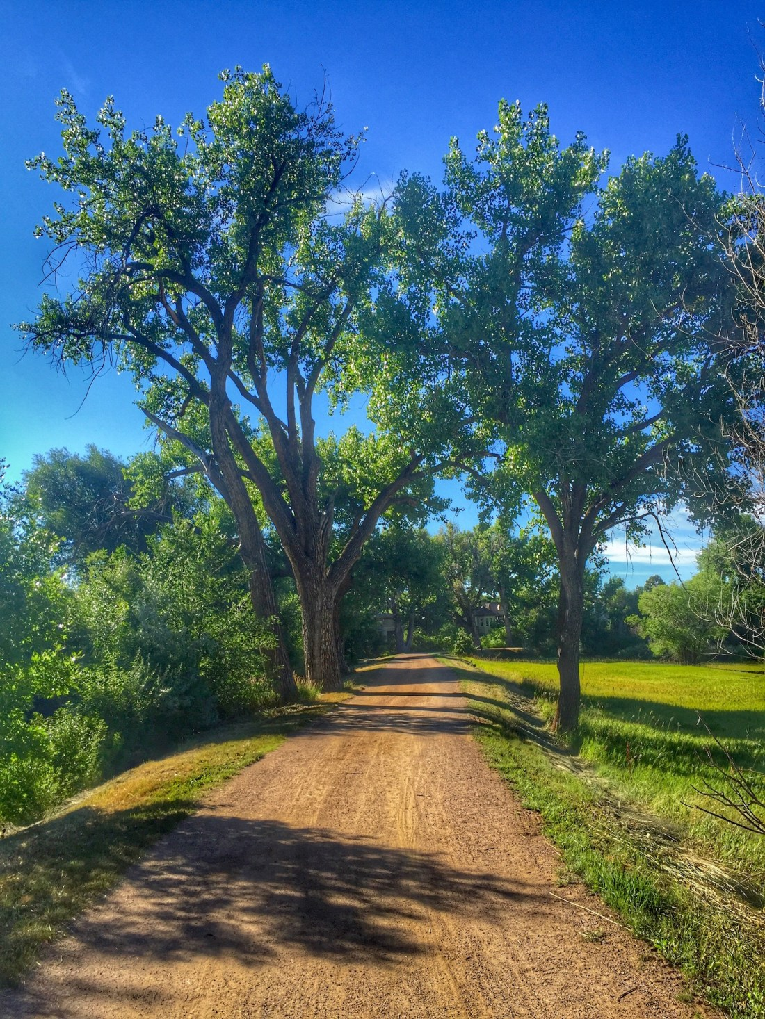 On the High Road of Denver's High Line Canal Trail