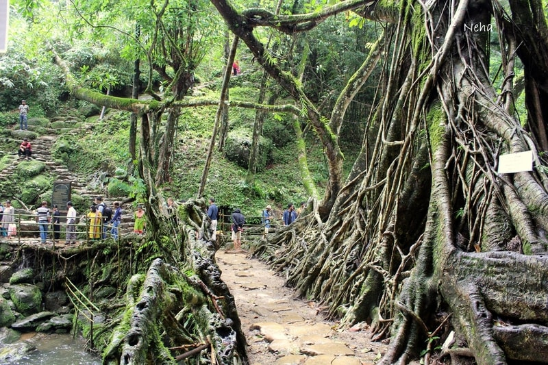 The Living root bridge near Mawlynnong