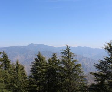 View of mountains and fir trees from Lal Tibba Landour