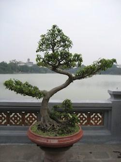 lake in vietnam with bonsai