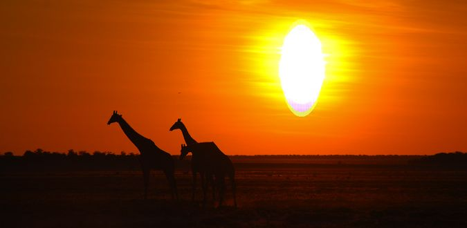 A stunning photo of a sunset from a safari in Etosha National Park, Namibia