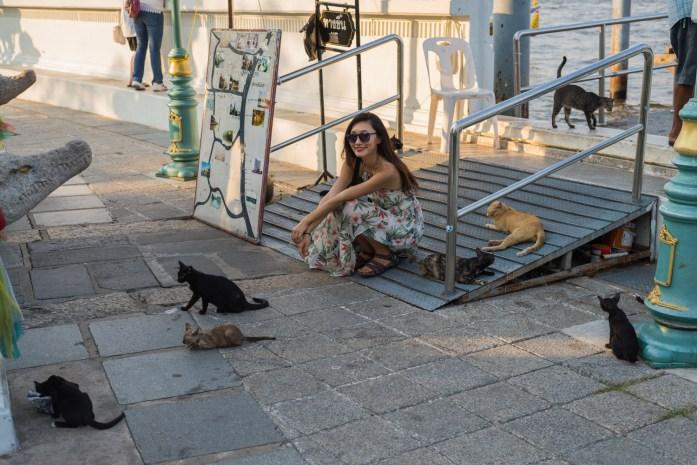 thailand, bangkok, wat arun, cats