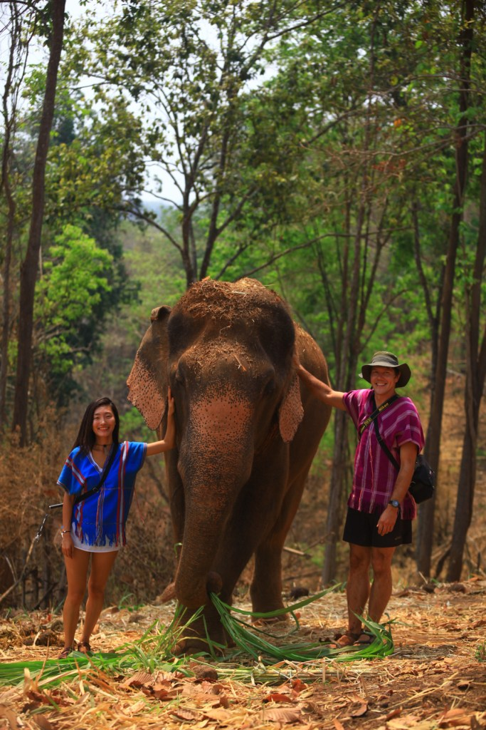 thailand, chiang mai, patara elephant farm, elephant