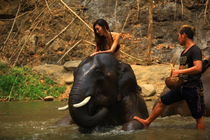 thailand, chiang mai, patara elephant farm, elephant, riding, washing