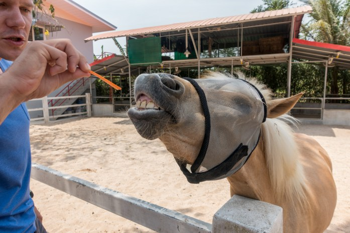 thailand, don sak, surat thani, farm, horse