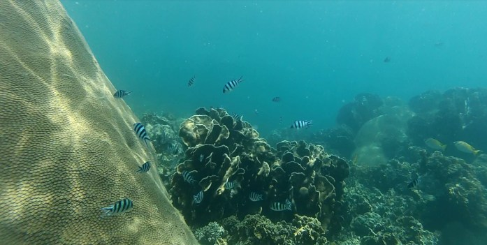 thailand, koh samui, snorkeling, diving, fish