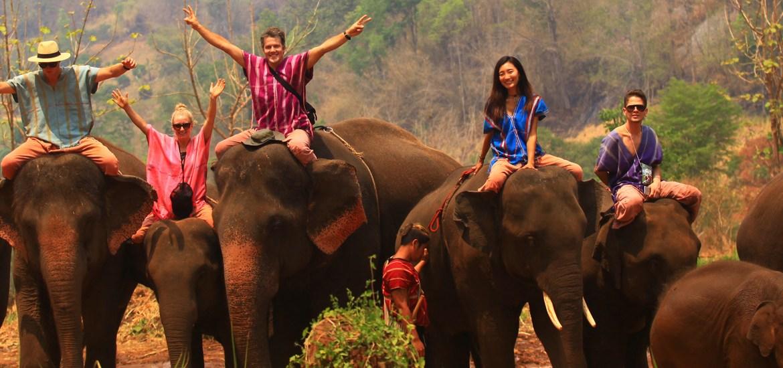 patara elephant farm, chiang mai, bangkok