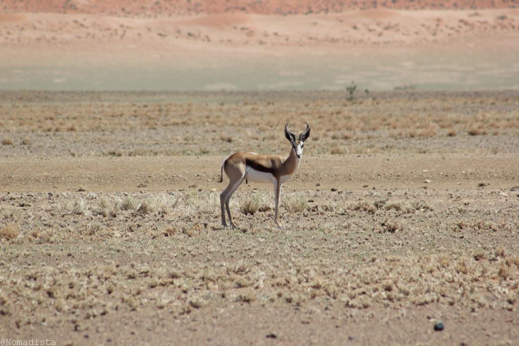 Desierto Namibia