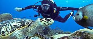Scuba Diving - Andaman Nicobar Islands, Cinque Island, Rutland Island, Snake Island (AROUND PORT BLAIR) and HAVELOCK ISLAND.Other Interesting sports are - Island Camping, Snorkeling, Trekking