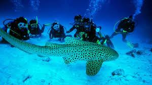 Tourist places to visit in Lakshadweep Diving, Lakshadweep