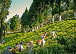 Tourist Places to visit near Darjeeling - Takdah Orchids