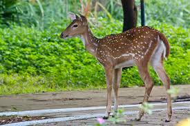 Tourist Places to visit in Chennai - Guindy National Park