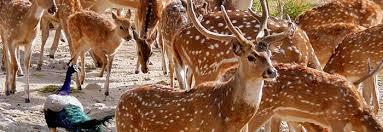 tourist places to visit near udaipur - Jai Samad Wildlife Sanctuary